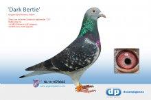 NL14-1678832 Dark Bertie (cock)