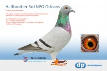 NL14-1688390 Halfbrother 3rd NPO Orleans (cock)
