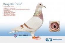 NL14-1688420 Daughter 1st Section winner Fleur (hen)