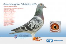 NL14-1699103 Granddaughter 5th NPO Orleans 14,117 p. � (hen)