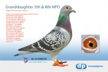 NL14-1699104 Granddaughter 8th NPO Bourges 9,503 p. � (hen)