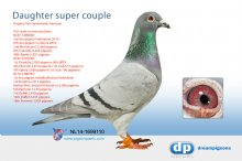 NL14-1699110 Direct daughter super couple � (hen)