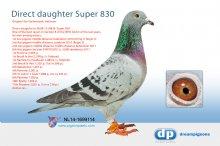 NL14-1699114 Direct daughter Super 830 � (hen)