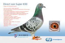 NL14-1699115 Direct son Super 830 � (cock)