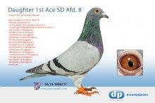 NL14-1699117 Daughter 1st Ace pigeon Short Distance Section 8 � (hen)