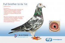 NL14-1733230 Full brother to Epke (4x 1st) and Epke Jr (2x 1st)