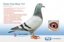 NL14-1733232 Full sister Blauwe 211 & Fast Blue 151 - hen