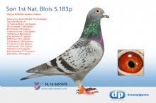 NL14-3451678 Son The Dominator 1st National Blois 5,183p - W. & D. Geudens