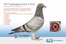 NL15-1898346 Dochter Topkoppel Liam x Tess - G. & P. Lindelauf