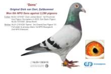 NL09-1393416 Sens: 6th NPO Sens (cock)