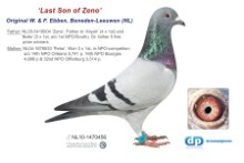NL11-1470456 Last Son of Zeno (blue cock)
