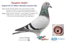 NL11-1470466 Daughter Diablo 1st NPO (blue hen)