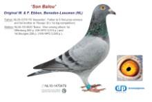NL11-1470479 Son Balou 5st & 10th NPO (slatey cock)