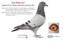 NL11-1470485 Son Elfpenner (blue cock)