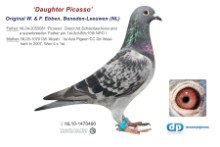NL11-1470490 Daughter Picsso (dark chequer hen)