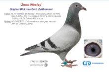 NL11-1929036 Son Wesley: 1st NPO Ablis 6,817 pigeons (cock)