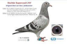 NL11-4400845 Daughter Supercrack 310: 3rd & 9th NPO (hen)