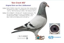 NL11-4400847 Son Wonder 377: 2nd NPO Nanteuil 10,703 pigeons (probably cock)